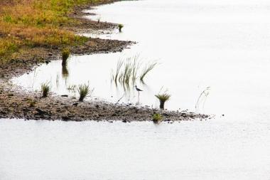 Zancuda cigüeñuela común en el lago de la Herdade dos Grous.