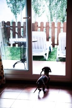 Eros descubre su nuevo jardín.