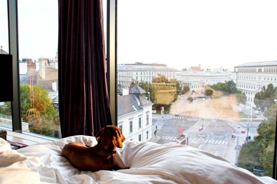 Comienzo de un nuevo día juntos en Viena.