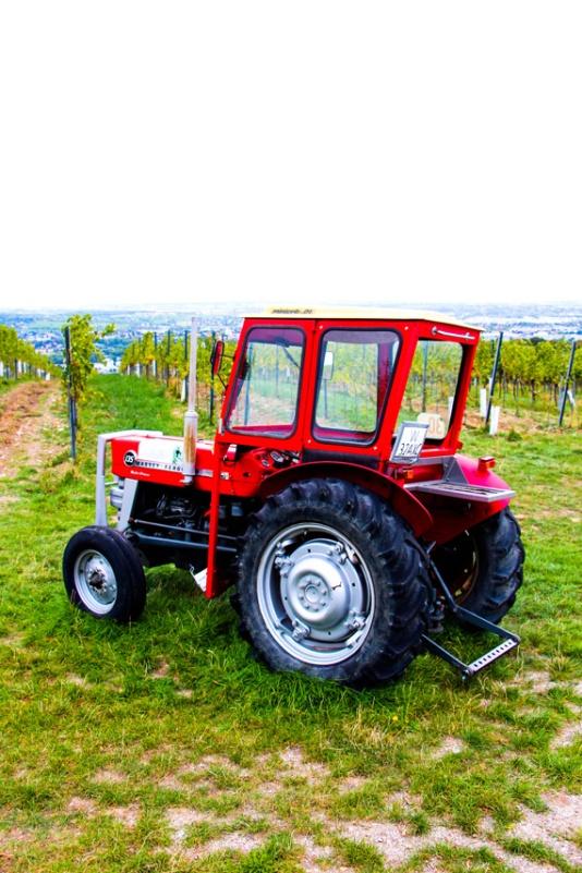 Recorriendo parte de las 700 hectáreas de viñas de vino vienés.