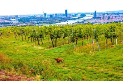 Eros, los viñedos, el Danubio y la ciudad de Viena.