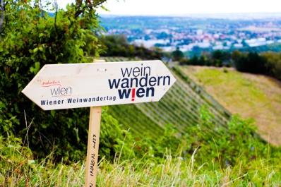 Viena es la única ciudad en el mundo que desarrolla la viticultura dentro de su área metropolitana.