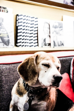 Caro, el perro de Liletta Colonna.