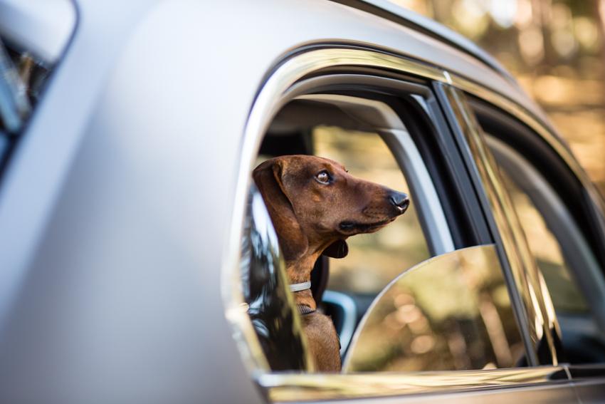 Abordo del FIAT 500X, Eros disfrutando de los olores y del paisaje de la Sierra de Gredos.