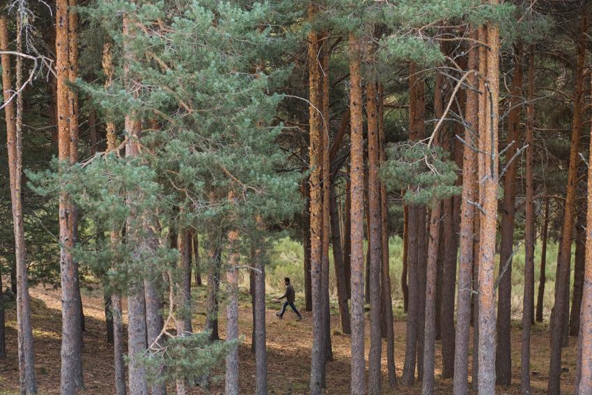 A los pies del Parador, un bosque con setas, ardillas, aves y caballos.