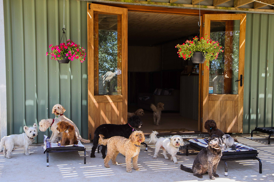 DOGUE Country Retreat.