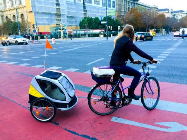 Ciclista con su perro.