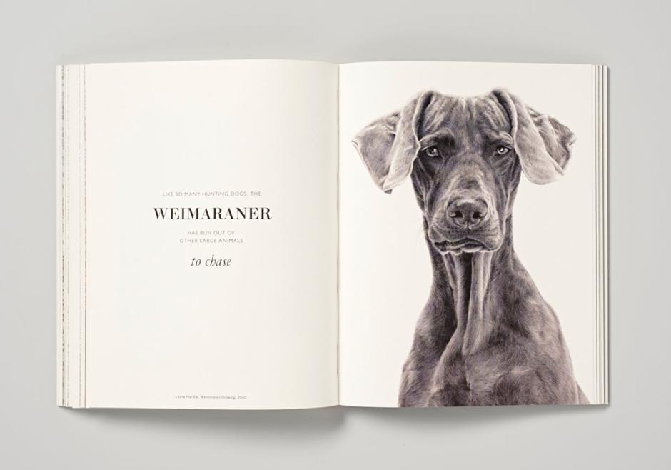 Weimaraner Drawing by Laura Hardie.