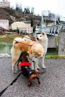 Eros haciendo nuevos amigos junto al río Salzach.
