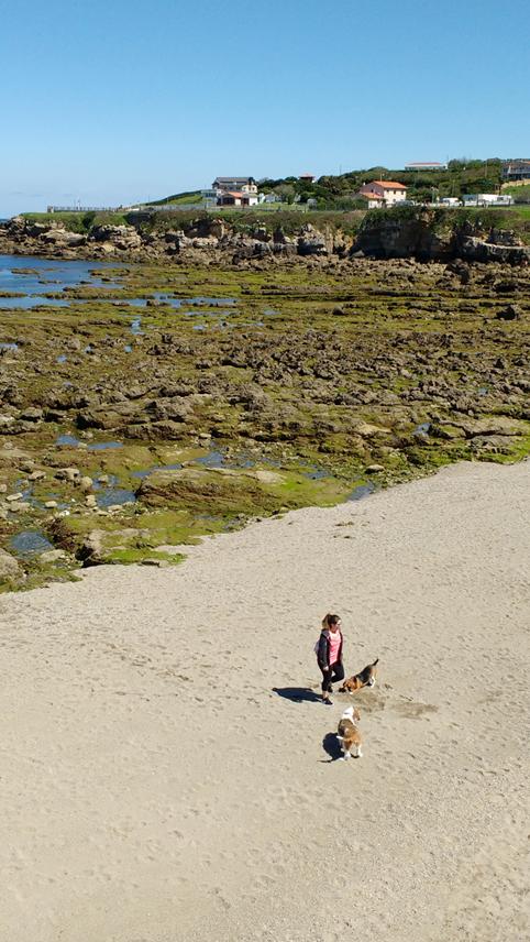Una de las playas amigas de los perros.