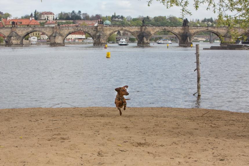 Eros, el río Moldava y el Puente de Carlos. Un spot inmejorable. Fotos: David Suárez Fernández.