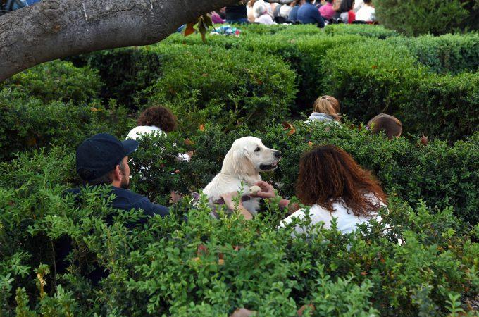 Espectadores en los jardines del Palacio de Schönbrunn. Foto: Nuria Cuga