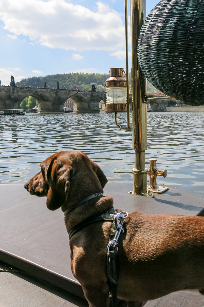 Contemplando Praga desde el río Moldava. Eros lleva arnés, chapa y correa de Mascoboutique.