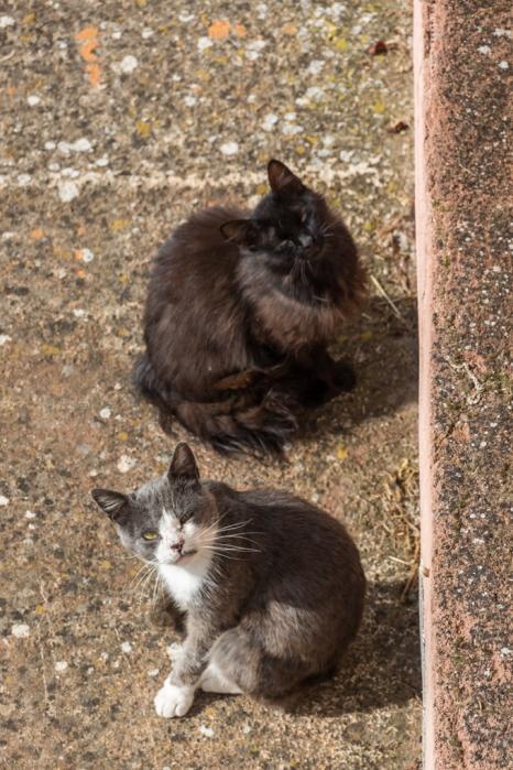 Gatos abandonados, ellos reciben mimos de la cocina.