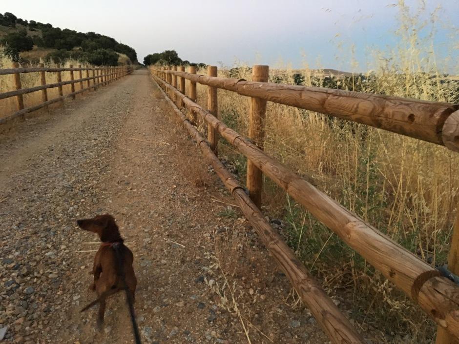 Así de bonitos eran nuestros paseos cada tarde.