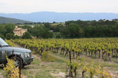 Wine safari por el viñedo.