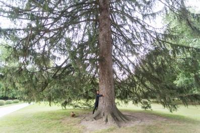 Abrazando un árbol centenario el Castillo de Ambras.